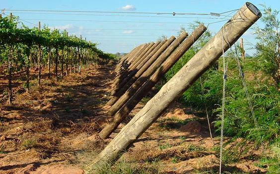 Tora de eucalipto tratado preço